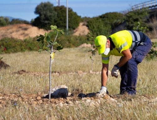 La neteja dels ecosistemes i la mobilitat sostenible centren la Diada del Medi Ambient de Marratxí