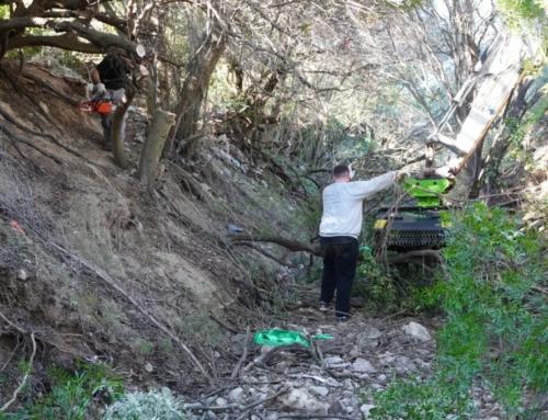 L'Ajuntament netejarà un tram de dos quilòmetres del Torrent de Coanegra per millorar l'evacuació de l'aigua